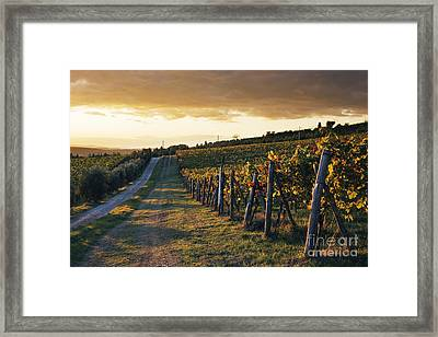 Road Through Vineyard Framed Print by Jeremy Woodhouse