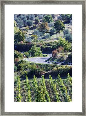 Road Winding Through Vineyard And Olive Trees Framed Print by Jeremy Woodhouse