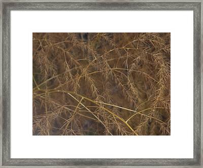 Roadside Framed Print by Paul Louis Mosley