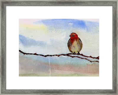Robin 1 Framed Print by Anil Nene