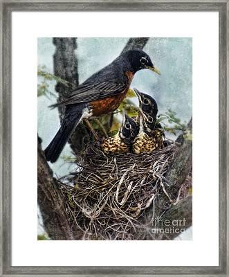 Robin And Babies In Nest Framed Print by Jill Battaglia