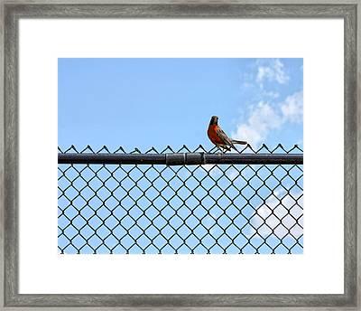 Robin Bird Sitting On A Fence Framed Print