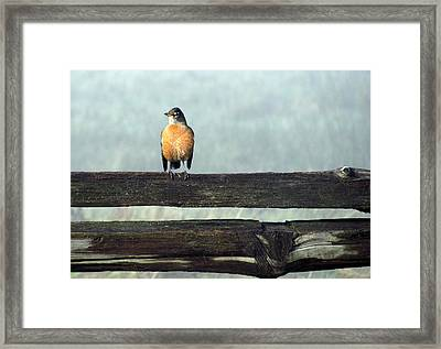 Framed Print featuring the photograph Robin In The Mist. by I'ina Van Lawick