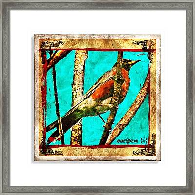 Robin Perch  Framed Print