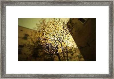 Rochester Fall Scene Framed Print