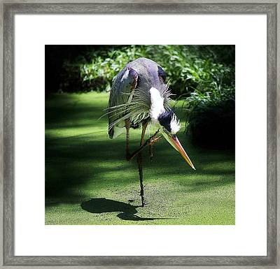Rock On Framed Print by Paulette Thomas