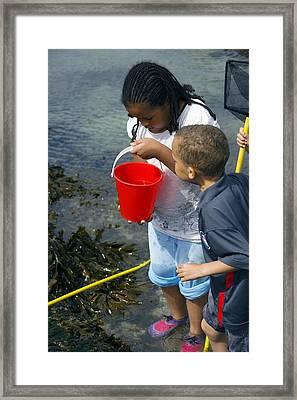 Rock Pool Fishing Framed Print