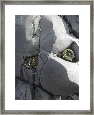 Rock Troll Framed Print by Cheryl Perin