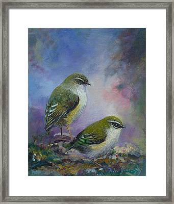 Rock Wren New Zealand Framed Print by Peter Jean Caley