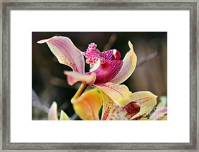 Rocking Chair Orchid Framed Print by Kaye Menner