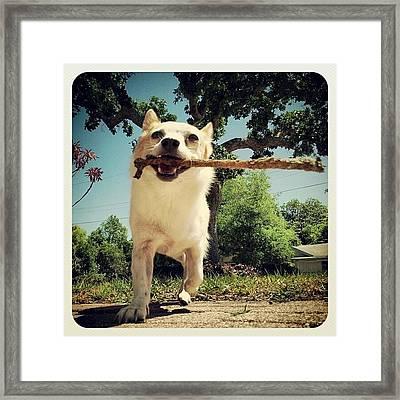 Rocko ! Framed Print