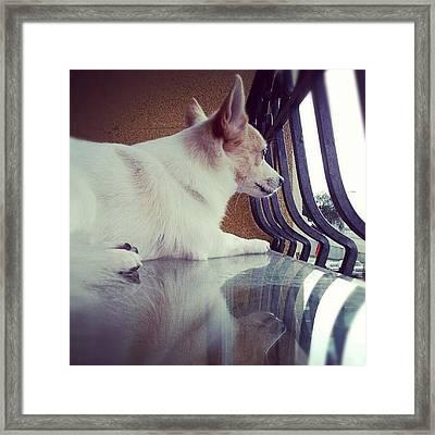 Rocko <3 #dog #cute #reflection #puppy Framed Print