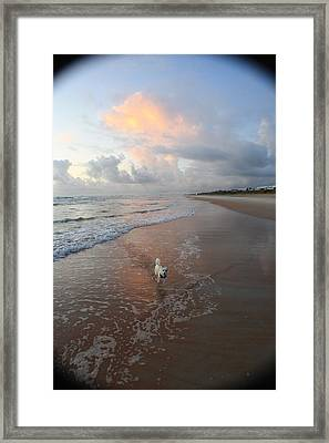 Rocko At Sunrise Framed Print