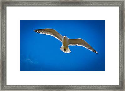 Rockport Gull Framed Print by Erica McLellan