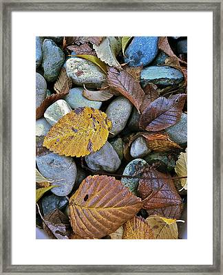 Rocks And Leaves Framed Print by Bill Owen