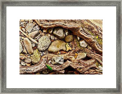 Rocks And Roots Framed Print by Christopher Holmes
