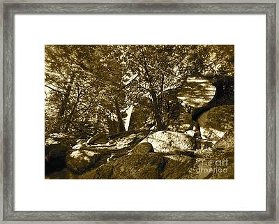 Rocks And Trees 1 Sepia Framed Print