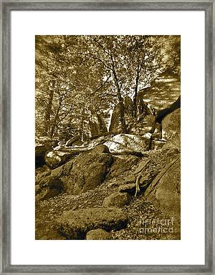 Rocks And Trees 2 Sepia Framed Print