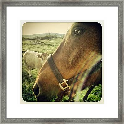 Rocky + Cow #rocky #horse #pferd #cow Framed Print