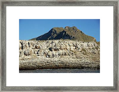 Rocky Cliffs Of Wolf Island Framed Print by Sami Sarkis