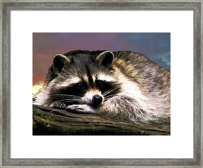 Rocky Raccoon Framed Print
