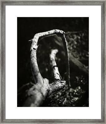 Rod And Staff Framed Print by Rebecca Sherman