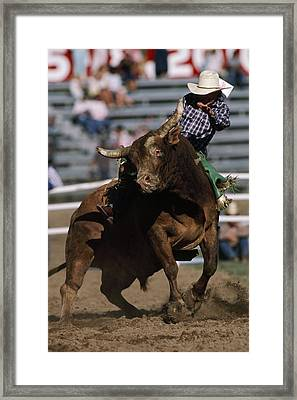 Rodeo Competitor In A Steer Riding Framed Print by Chris Johns