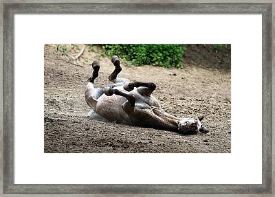 Rollin In The Dirt Framed Print