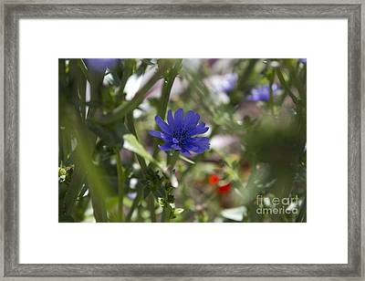 Romaine Lettuce Flower Framed Print by Donna Munro