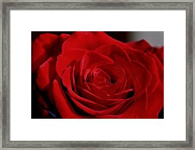 Romance Framed Print by Ren Alber