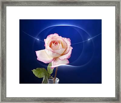 Romance Rose Framed Print by M K  Miller
