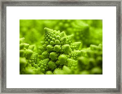 Romanesco Cauliflower Head Framed Print