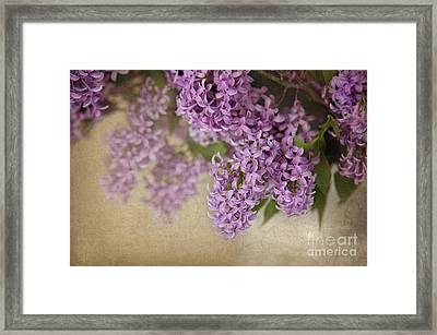 Romantic Lilac Framed Print by Cheryl Davis