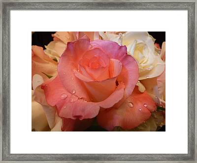 Romantic Roses And Raindrops Framed Print by Cindy Wright