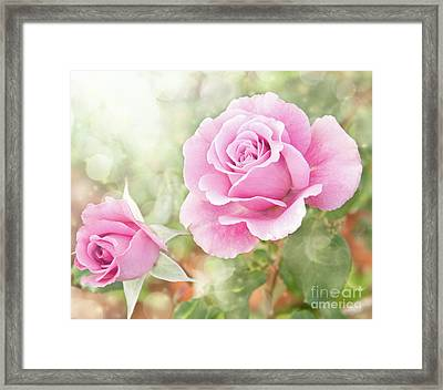 Romantic Roses In Pink Framed Print