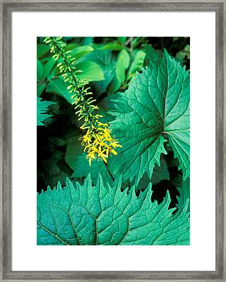 Rommany Road, London Small Urban Walled Garden With Unusual Planting And Nice Detailing : Close-up Of Foliage And Yellow Flower, July Framed Print by Suzie Gibbons