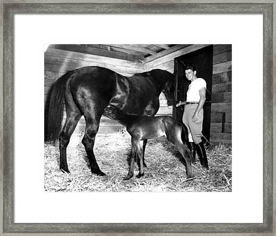 Ronald Reagan On Tar Baby And Her Foal Framed Print by Everett