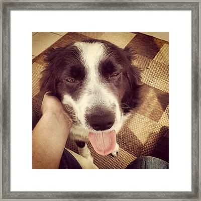 @ronnie746 #pip #bordercollie #border Framed Print