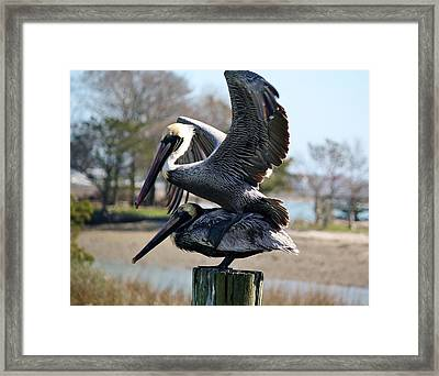 Room For Two Framed Print by Paulette Thomas