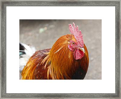 Rooster Framed Print by Artistic Photos