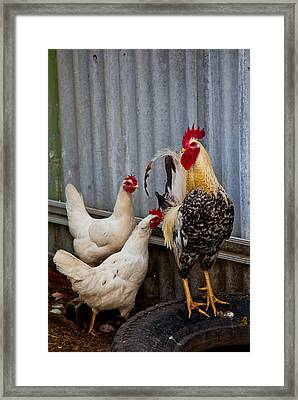 Rooster Rules Some Framed Print by Carole Hinding