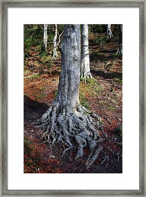 Rooted To The Spot Framed Print