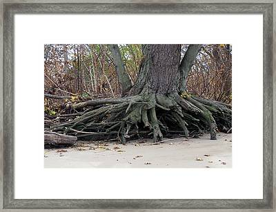 Framed Print featuring the photograph Roots 001 by Dorin Adrian Berbier