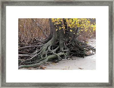 Framed Print featuring the photograph Roots 002 by Dorin Adrian Berbier