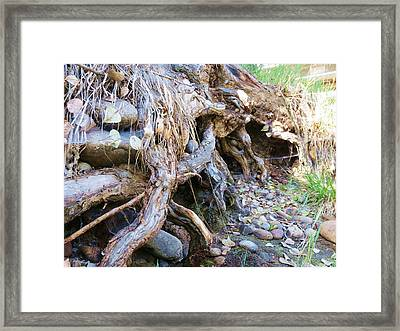 Roots And Stones Framed Print by Don Barnes