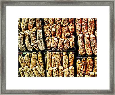 Roots Framed Print by Anne Ferguson