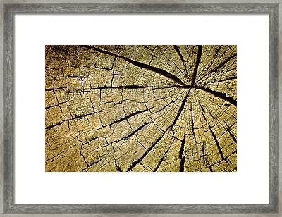 Roots Framed Print by Dr Feelgood ®