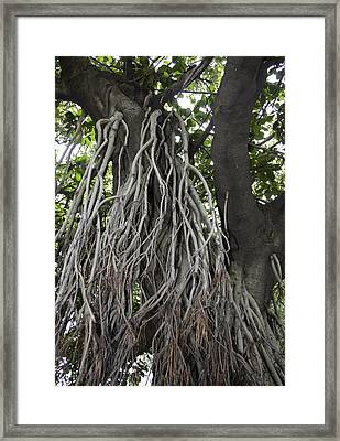 Framed Print featuring the photograph Roots From A Large Tree Inside Jallianwala Bagh by Ashish Agarwal