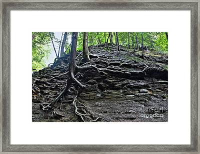 Roots In Shale Framed Print by Ted Kinsman
