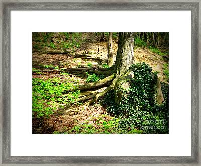 Roots Framed Print by Maria Scarfone